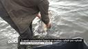 S nově vysazenými kapry se rybáři mohou jen vyfotit